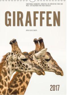 Die Giraffen sind massiv vom Aussterben bedroht. In den vergangenen 30 Jahren sei die weltweite Population der Tiere um knapp 40 Prozent gesunken, gab die IUCN bekannt. Der Bestand wird derzeit auf rund 100.000 geschätzt.   Hierzu mein passender Kalender: https://www.moluna.de/kalender/130143229-emotionale+momente%3A+giraffen%2C+die+h%F6chsten+tiere+der+welt./