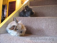 Bunnies keep watch on the stairs:)