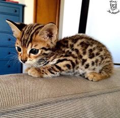 Little leopard - Album on Imgur