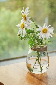 pretty and simple daisy in glass