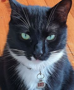 I take meal time very seriously! The human is 3 minutes late filling my food bowl! Submitted by: Auntie Kate Cathie #catlife #tuxedocat #whatcatsthink #catoftheday #catlover #catlady #pawfection #catblogger #mealtime