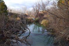 El manglar de Ruidera  #ruideratreasures #lamanchahumeda #nature #photography