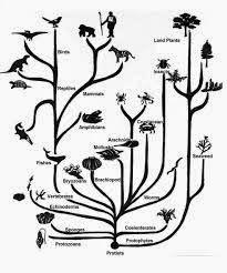 Ateu Racional - Livre pensar: Evolução