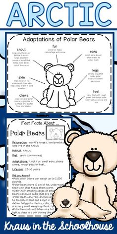 Are you teaching your students about Arctic animals, and their adaptations? This resource if for kids and has habitat activities, worksheets, graphic organizers, and posters to learn about Arctic animal adaptations and facts. Science Curriculum, Science Lessons, Science Activities, Autism Activities, Life Science, Polar Bear Fur, Polar Animals, Polar Bears, Arctic Habitat