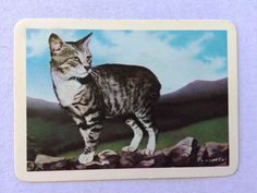 Vintage Swap / Playing Card - Wide - Manx Cat