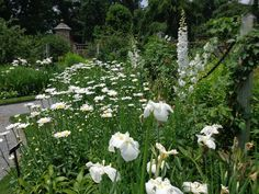 The Gardens At Old Westbury, Long Island, Walled Garden Center 7/1/