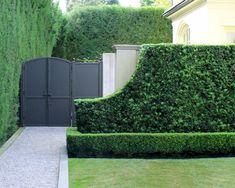 Just a perfect yew hedge to kick off your Monday! Boxwood Garden, Garden Hedges, Brick Garden, Lawn And Garden, Garden Landscaping, Home And Garden, Formal Garden Design, Patio Trees, Backyard Plan