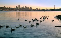 Lake Union sunset