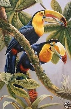 Toucan canvas ~ETS #toucans