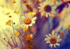 wildflowers by kokoszkaa.deviantart.com
