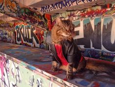 Lorenzo 'the cat'- Joann Biondi photo