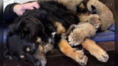 Situação emocionou veterinários, que afirmam que o ato foi feito de maneira completamente independenten