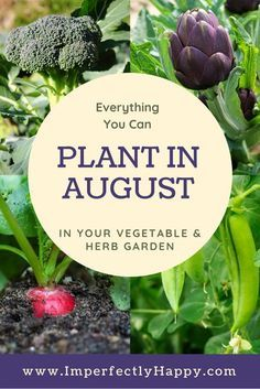 Vegetables Gardening Everything you can plant in August in your herb and vegetable garden. - What seeds to plant in August for an awesome Fall garden. Zone 9 and 10 listed. Have your best vegetable garden ever! Fall Vegetables, Organic Vegetables, Growing Vegetables, Gardening Vegetables, Greenhouse Vegetables, Gardening For Beginners, Gardening Tips, Gardening Quotes, Culture D'herbes