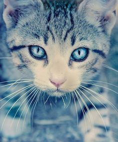 Beautiful cat with beautiful eyes