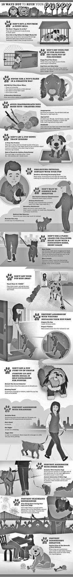 M.         www.thedogtrainingsecret.com/15-Ways-Not-To-Ruin-Your-Puppy/