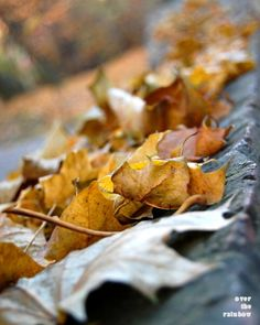 #Autumn golden leaves, #Fall #photograph, Dry leaves, Autumn home deocr, 10x8, Giclee print - titled: Autumn Impressions IV.