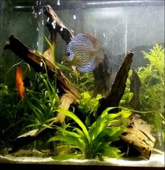 OUR discus !!