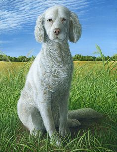 Lady - Dog art featuring the painting Lady by Cara Bevan