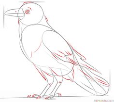 How to draw a raven | Step by step Drawing tutorials