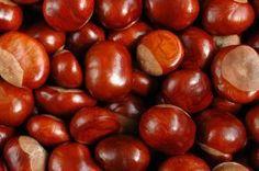 Poznaj cudowne właściwości kasztanów! Sweet Chestnut, Polish Recipes, Beauty Care, Nutella, Natural Remedies, Herbalism, Health And Beauty, Spices, Food And Drink