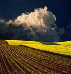 Soybean fields in Kansas