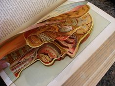 anatomy pop up book
