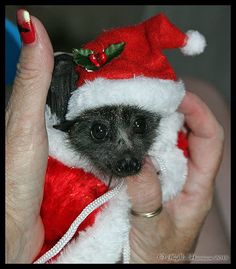 Christmas bat
