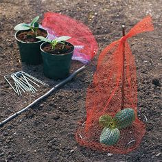 Great way to use old onion/ orange bags fro protection from critters...Found on the repurposing 24/7 Facebook page.