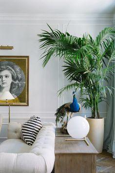 Kentia palme wohnzimmer einrichten und wohnen pinterest for Zimmerpflanzen wohnzimmer