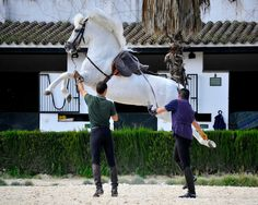 Horse in training at the Andalusian School of Equestrian Art