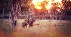 Elephants in Zambia | Go biking with Cycle for Plan in Zambia and help Plan Nederland | Big Five