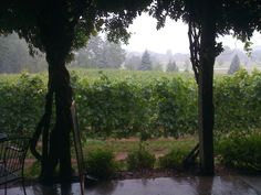 Summer storm in the vineyard   Bowers Harbor Vineyards   Old Mission Peninsula   Michigan