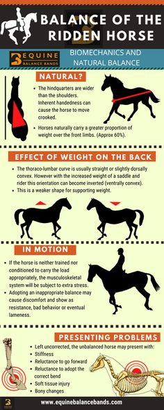 Horse Training Tips, Horse Tips, Equine Massage Therapy, Horseback Riding Lessons, Horse Anatomy, Horse Facts, Horse Grooming, Horse Care, Horse Riding