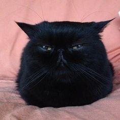 ball of cat