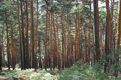 El Consejo de Gobierno aprueba los Estatutos del Parque Nacional de la Sierra de Guadarrama http://revcyl.com/www/index.php/medio-ambiente/item/3211-el-consejo-de-gobierno-aprueba-los-estatutos-del-parque-nacional-de-la-sierra-de-guadarrama