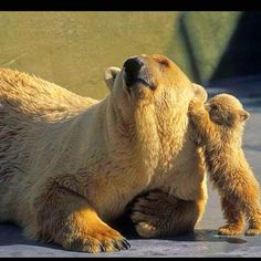 Mamma bear and baby bear. How cute!!!