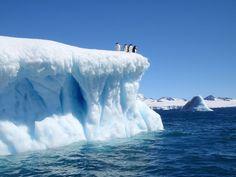 Devil Island Penguins, by Todd White. Antarctica NatGeo #monogramsvacation