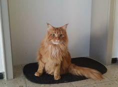 Ich hab mich übrigens am Wochenende mal ein wenig im Hausflur umgeschaut.  Ob hinter dieser Tür wohl auch eine Katze lebt? Eventuell jemand von euch??? -http://ift.tt/1ZZx1v7