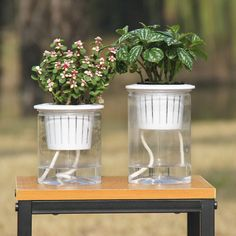 Auto Irrigate Flower Pot Vase Clear Automatic Water Absorption Self Watering Hydroponic Flower Pot Planter Lazy Planting Pots|Flower Pots & Planters| - AliExpress Grow Kit, Flower Pots, Flowers, Self Watering, Hydroponics, Planting, Lazy, Glass Vase, Planter Pots