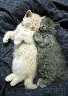 1000 Images About Cute Things Sleeping On Pinterest
