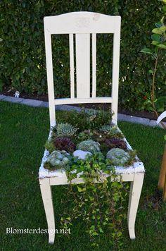 BLOMSTERDESIGN.NET: En gammal stol full med taklökar, mossa och murgrö...