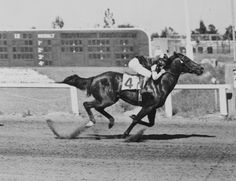 Running was her game; Black Easter Bunny was her name. Inducted into the Hall of Fame in 2002, this mare provided the racing world with one of the most prepotent female lines of durable, winning sprinters. Learn more about the AQHA Hall of Fame inductees at http://aqha.com/Foundation/Museum/Hall-of-Fame/Hall-of-Fame-Inductees.aspx .