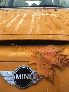 50 Shades of Volcanic Orange. #MINIofDutchessCounty #DrivePrestige #MINIUSA • • • • • #MINILovers #LetsMotor #HappyMotoring #MINIFan #miniac #MINICooperWorld #MINICooper #MINILife #MotorOn #Like4Like #volcano #volcanicorange #fall #foliage #leaves #adventureawaits #falldecor #halloween #rainydays #rain #drive #wet #50Shades