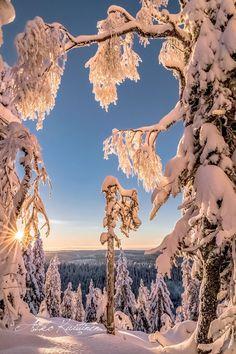 https://www.facebook.com/Asko.Kuittinen.kuvat/