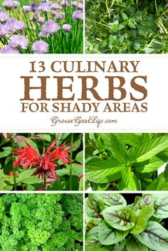 13 Culinary Herbs to Plant in Shady Areas: The quantity of direct sun an area receives daily influences the types of herbs that will grow successfully. By choosing herbs that are suited for partial sun and partial shade you can make the most of shady spots and turn them into an herb garden.