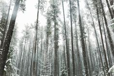 Image de forest, nature, and winter