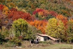 Bosque Orgi. Precioso bosque con senderos para recorrerlo con niños en una preciosa excursión. #viajarenfamilia