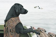 Teach your dog how to behave in a boat... (this looks like Bandit, and hes good in a boat... gonna have to teach Rambo)