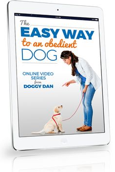 How to be pack leader of your dog. Find the answers to the 2 questions dog owners ask the most! Learn how to be pack leader of your dog by reading this article! Dog Training Methods, Training Your Dog, Pitbull Training, Pet Dogs, Dogs And Puppies, Westie Puppies, Bulldog Puppies, Pekinese, Dogs Online