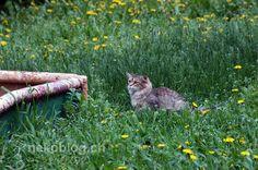 muscovite cat